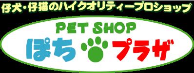 埼玉県/さいたま市のペットショップ/チワワ/子犬/子猫/販売なら有限会社ぽちプラザ