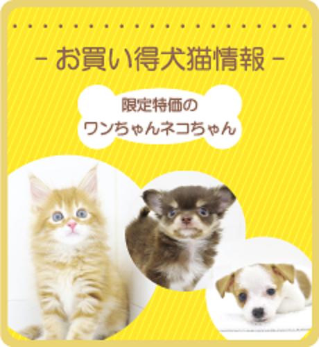 お買い得犬猫情報